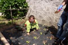 Horta-escolar-EI-053